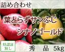 葉とらずサンふじ・シナノゴールド 詰め合わせ 秀品 約5kg 県認証無し リンゴ 詰め合わせ 青森 国産 認なし