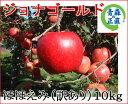 ジョナゴールド ほほえみ(訳あり) 約10kg 県認証無し りんご リンゴ 訳あり品 青森 国産 認なし