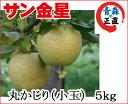 葉とらずりんご 訳あり 【金星 丸かじり 約5kg 県認証無し】 りんご リンゴ 小さめ 食べきり