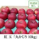 紅玉 こうぎょく 丸かじり 約10kg 県認証無し りんご リンゴ 小さめ品 青森 国産 認なし