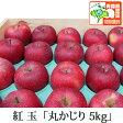 紅玉 こうぎょく 丸かじり 約5kg 県認証有り りんご リンゴ 小さめ 減農薬栽培 特別栽培農産物認証 青森 国産 認有り