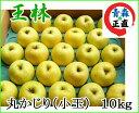 王林 おうりん 丸かじり 約10kg 県認証無し りんご リンゴ 小さめ 青森 国産 認なし