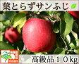 葉とらずサンふじ 高級品 約10kg 県認証有り りんご リンゴ 贈答用 減農薬栽培 特別栽培農産物 青森 国産 認有り