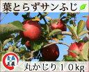 葉とらずりんご 【葉とらずサンふじ 丸かじり 約10kg 県...