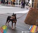 犬のリード ファンクションリード パラコードペット用品パラシュートコード8m利用 ウエストリード しつけ 犬 首輪 パラコード 散歩 犬用 カジュアル おしゃれ カラフル カラー 訓練 トレーニング ハンドメイドドッグリード