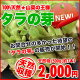 【山菜の王様】北海道産天然★BIGサイズのタラの芽(500g)