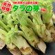 【山菜の王様】北海道産天然BIGサイズ★タラの芽(1kg)
