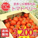 【送料無料】【規格外品】今話題のミニトマト★北海道名寄産訳ありトマトベリー【サイズ不揃い】 約1.5kg入 ※7月中旬以降収穫後のお届けとなります。【マラソン1106P02】