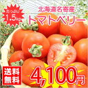 【送料無料】今話題のミニトマト★北海道名寄産トマトベリー【サイズ混合】 約1.5kg入