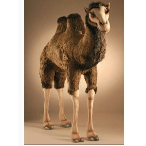 HANSA 2064 フタコブラクダ180 全長:180cm CAMEL BH2