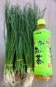 タマネギ苗(中生品種・OP黄:50本)