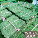 芝生 姫高麗芝 10平米【普通便】【送料無料】(ただし 北海...