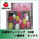 チューリップ球根 徳用 一重咲 混合 50球入り【赤 黄 白 ピンク 紫 個数不揃】
