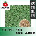 【タキイ種苗】TTSノシバ 1kg 芝の種(のしば)多年生【取寄商品】