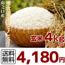 新米【29年産】 ヒノヒカリ 無農薬玄米 4kg(2kg×2袋)宮崎県 山之口産 (産地直送)