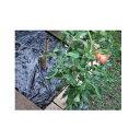 イワタニ 菜園用 たまねぎ用 穴あき黒マルチ 3515 45mm孔 0.02mm×135cm×50m 農業資材 園芸用品 家庭菜園 マルチフィルム