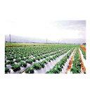 オークラ(大倉) 白黒マルチ こかげマルチ 0.02mm×180cm×200m 3本入 農業資材 園芸用品 家庭菜園 マルチフィルム