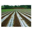 東罐 トーカン ボーチュウシルバーL 巾210cm 厚さ0.023mm 200m巻 2本入 ビニールハウス マルチフィルム 農業資材