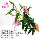 オリエンタル大輪百合 ピンク 1本【RCP】【HLS_DU】お正月 松 千両 迎春