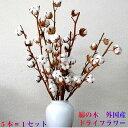 ドライフラワー 綿の木 コットンフラワー 5本束 クリスマス