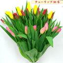 生花 花束 チューリップ 30本 ギフトラッピング