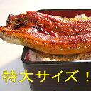 浜名湖うなぎのあいかねうなぎ蒲焼特大サイズ3匹脂ノリノリ!1匹(160g前後)期間限定500円オフ