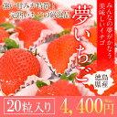 当店厳選の大粒 いちご 20粒!!ビタミン たっぷり!!食感・甘味・酸味ともにバランスが良く、大粒で美味しい苺です★