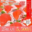 当店厳選の大粒 いちご 25粒!!ビタミン たっぷり!!食感・甘味・酸味ともにバランスが良く、大粒で美味しい苺です★