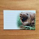 アイヌ木彫りの熊メッセージカード10枚セット フナク ワ エ エク
