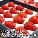母の日フルーツ いちご さがほのか 約300g×2パック入 送料無料