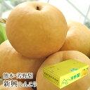 新興梨(しんこうなし) 熊本県産 約5kg(10〜13玉入り) 送料無料 芳野の日本梨