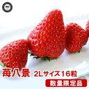 苺八景(いちごはっけい) 滋賀県野洲市産...