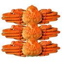 姿ズワイガニ (ずわい蟹) 特大 約600g×3尾 送料無料(カニ 蟹 姿がに 姿ガニ 姿蟹)