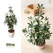 光触媒人工植物 Olive 〔オリーブ〕