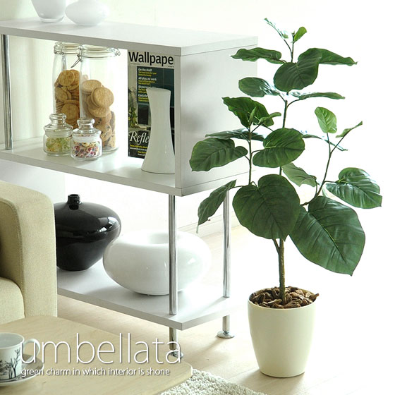 送料無料 観葉植物m ウンベラータ 光触媒 人気 80c インテリア 大型 おしゃれ 植物…...:air-rhizome:10001832