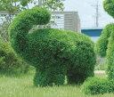 【送料無料】人工観葉植物 光の楽園 ゾウ S 286B600【造花/フェイク/リビング/玄関/アートフラワー/インテリアグリーン】