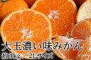 食品 - 大玉濃い味みかん(2Lサイズ)ギフト用 約3kg(87-N)