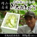 【送料無料】中塚さんの桃太郎ぶどう800g化粧箱 05P03Dec16