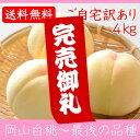岡山県産白桃 最後の品種 ご自宅訳あり 4Kg 10〜15玉 栽培園限定商品 送料無料 希少品のため収穫予定数量完売と同時に販売終了致します
