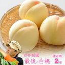 岡山県産白桃 最後の品種 ご自宅訳あり 2Kg 5~8玉 栽培園限定商品 送料無料 希少品のため収穫予定数量完売と同時に販売終了致します【早期ご予約受付中】