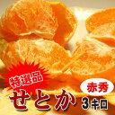 【送料無料】スーパー柑橘せとか特選品3kg【赤秀】 05P03Sep16