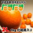 【送料無料】宮崎産完熟金柑(きんかん)「たまたま」2Lサイズ1kg化粧箱