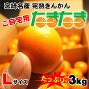 【送料無料】【訳ありご自宅用】宮崎産完熟金柑(きんかん)「たまたま」Lサイズ3kg