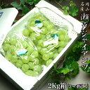 岡山県産 瀬戸ジャイアンツ 2キロ箱(2~4房入り)送料無料
