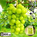 岡山県産 贈答用 名人のシャインマスカット800g化粧箱 送料無料 期間限定 ポ