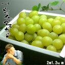 岡山県産 贈答用 名人のシャインマスカット1.2kg化粧箱 送料無料