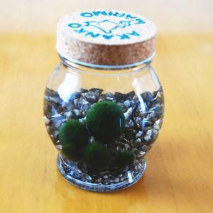 ミネラル アクアリウム インテリア ガラス瓶