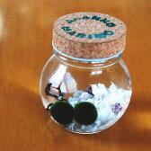 癒し系アイテムコルク瓶に入った水道水で育つ養殖まりも2個入り
