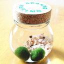 養殖まりも2個入り  水草 植物 水道水で育成可能 北海道お土産 インテリア ギフト ガラス瓶 コル