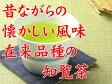 鹿児島茶・知覧茶在来種 80g メール便(DM便)送料無料(am10)(緑茶 茶葉 煎茶)05P01May16 P06May16